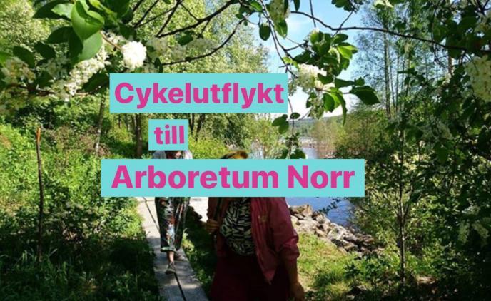 Cykelutflykt till arboretum norr lesbisk frukost Umeå